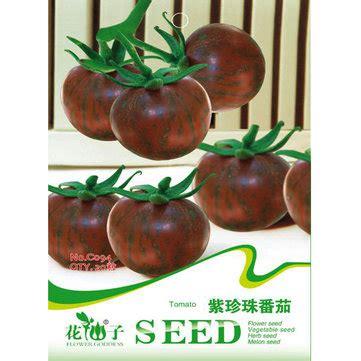 Purple Pearl Tomato purple pearl tomato seed high sugar balcony courtyard seed