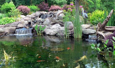 how much does a koi pond cost in maryland premier ponds dc md va pond contractor