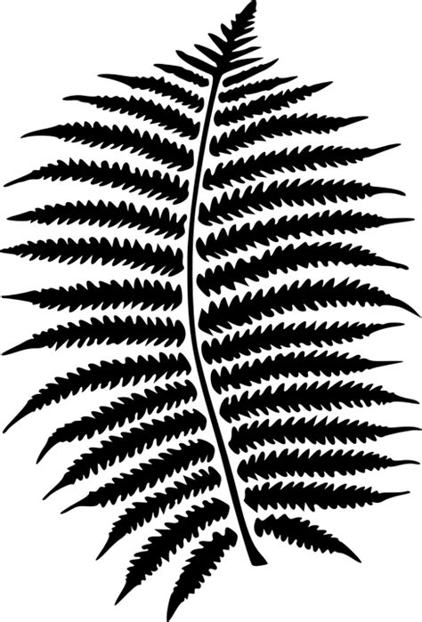 Fern pattern clipart 20 free Cliparts | Download images on