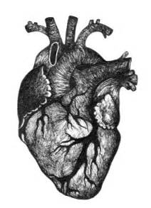 human heart drawing lucy flickr