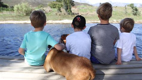 pet friendly places to stay dog cat and horse friendly 20 pet friendly places to stay in sa travelstart blog