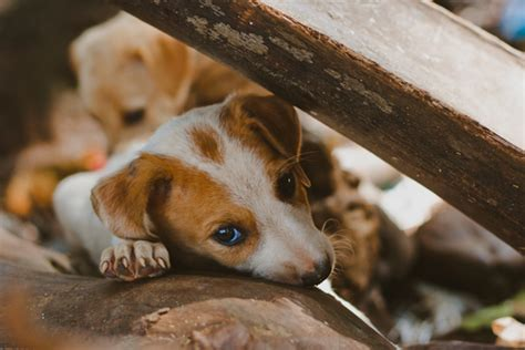 homeless puppies sochi dogs a small glimpse of a global issue iheartdogs