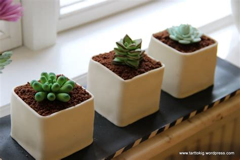small pots small pots with succulents mini cake tutorial tarttokig
