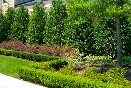 Evergreen Landscaping Ideas Evergreen Landscaping Ideas 28 Images Spruce Evergreen And Yellow On Pinterest Types