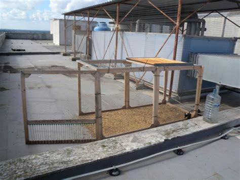 gabbie cattura piccioni catturavano i colombi degli ospedali con gabbie