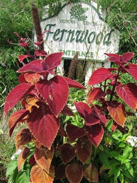 Fernwood Botanical Garden And Nature Preserve The Top 10 Things To Do In Michigan 2017 Tripadvisor