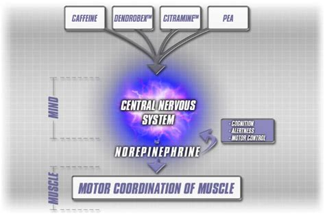 Masker Spirulina Lung human cell diagram car interior design