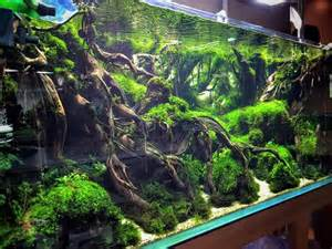 aquascaping a collection of ideas to try about fish