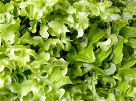 des salades pour l 233 t 233 elles r 233 sistent 224 la chaleur et 224
