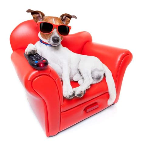top pet gifts 10 totally awesome gifts for dog lovers top dog tips