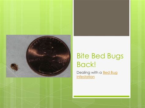 Dealing With Bed Bugs by Bite Bed Bugs Back Dealing With A Bed Bug Infestation