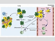 Tumor-Associated Macrophages: From Mechanisms to Therapy ... L Arginine Results