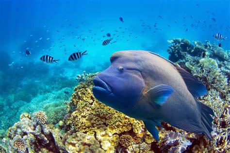 best place to dive the great barrier reef great barrier reef tours cairns passions of paradise