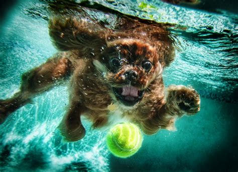 puppies underwater underwater dogs by seth casteel