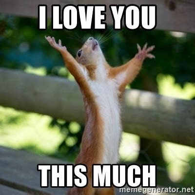 Love You Memes - i love you this much praising squirrel meme generator