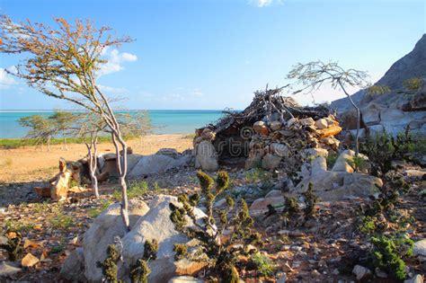 hutte primitive image stock image du arbre yemen plage - Hutte Primitive