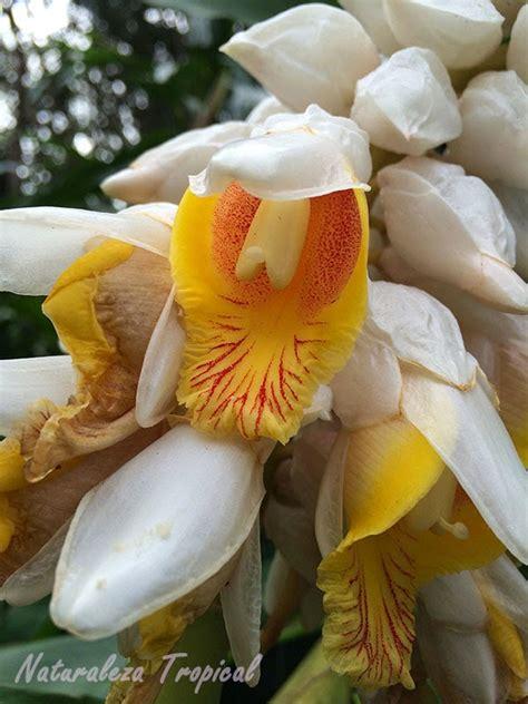 imagenes hermosas raras fotos de flores hermosas y raras