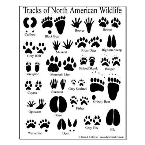 printable animal tracks identification animal tracks guide posters kids party pinterest