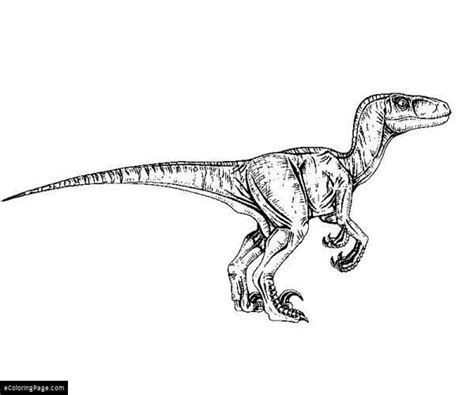 Coloring Page Velociraptor by Jurassic Park Velociraptor Coloring Page Coloring