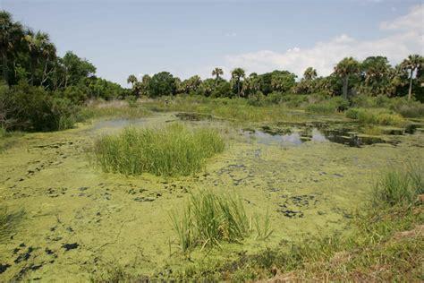 file marsh wetland landscape nature scenic jpg wikimedia