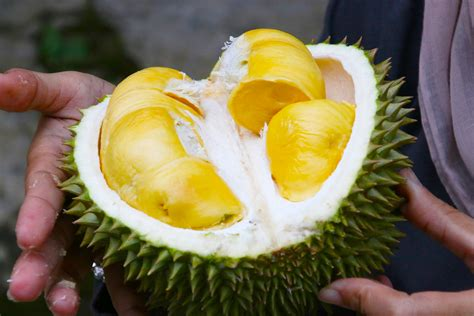 tempat makan durian  malaysia  musim durian