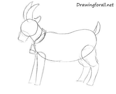 how to draw new year goat how to draw a goat for beginners drawingforall net