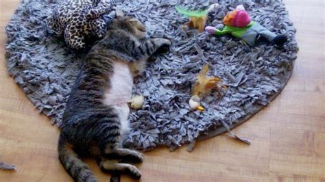 Puzzle Rug Cat by Cat Play Rug Rugs Ideas