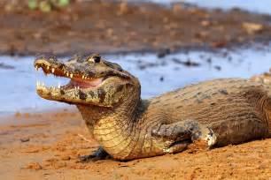 Aquatic Bathtub Where To Find Incredible Native Animals In Brazil