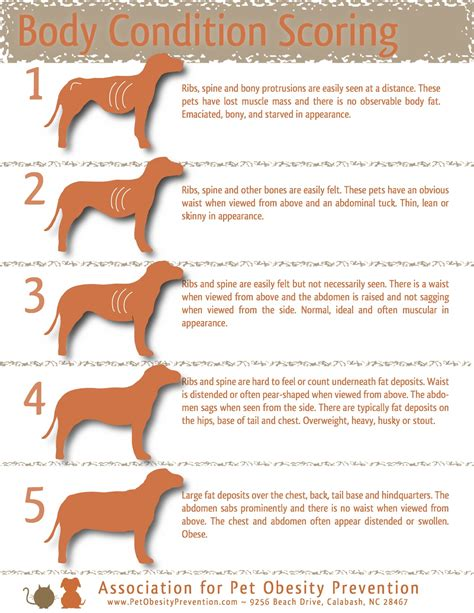 golden retriever diet chart article why quot overgrowing quot your large breed puppy is dangerous golden retrievers