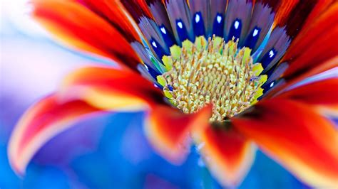 fiori sfondo sfondi fiori 44 immagini