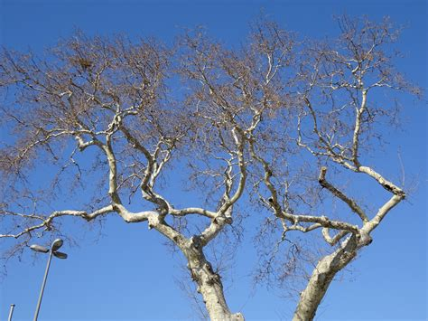 imagenes de arboles invierno fotos gratis 225 rbol naturaleza rama flor nieve