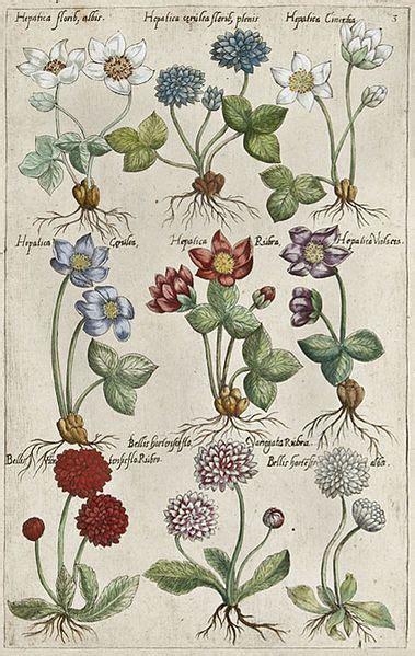 libro botanical illustration for beginners 763 best libros de vegetabilibus растения medieval manuscripts botanical images on