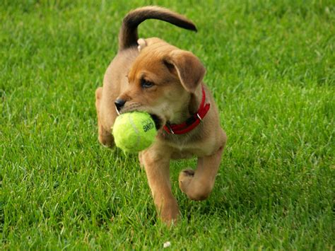 when should you start a puppy pah 12 things every puppy owner needs to