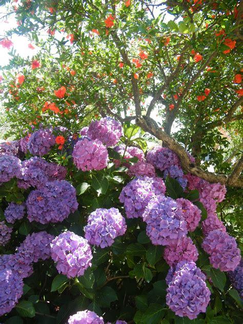 fiori a luglio appennino terra di frontiera fiori a luglio