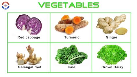 vegetables with english names names of vegetables learning english 365 youtube