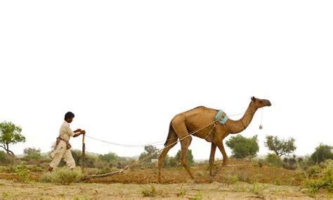 thar desert animals pictures of thar desert after the