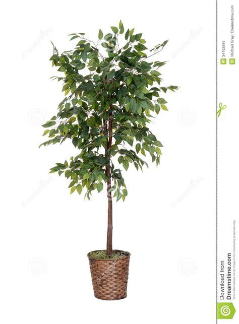 fake tree isolated fake tree royalty free stock images image 34162899