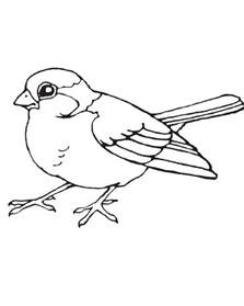 bird coloring book printable bird coloring pages coloring me