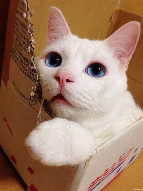 cat wallpaper imgur photos ce chat qui dort a bien fait rire les internautes