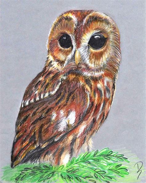 Pictures Of Owls To Color by 230 Best Drawing Images On