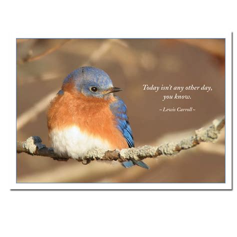 quotes about bluebirds quotesgram