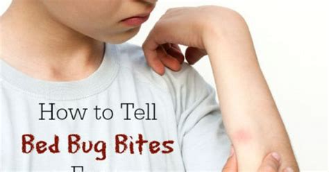 chiggers vs bed bugs mosquito bites vs bed bug bites how to tell the