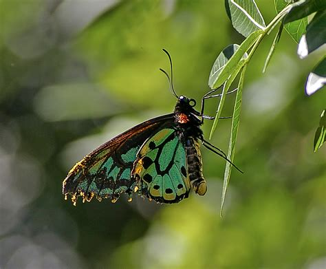 visitor pattern c black wasp free images nature wing leaf flower wildlife wild