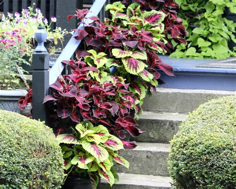 containerscaping take your potted plants to a new level