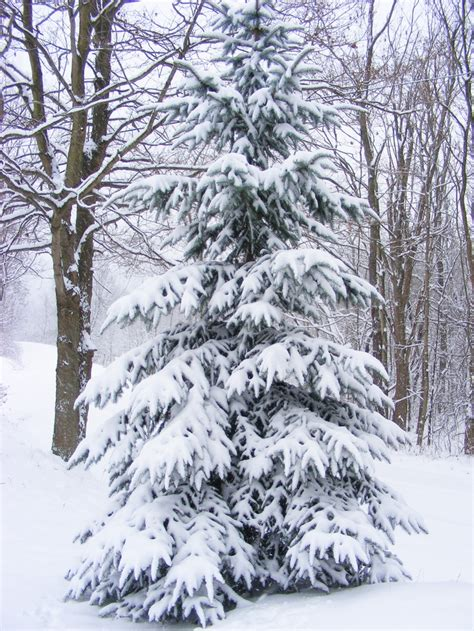 snow covered christmas tree 4ft 1000 ideas about snow covered trees on winter snow snow and winter