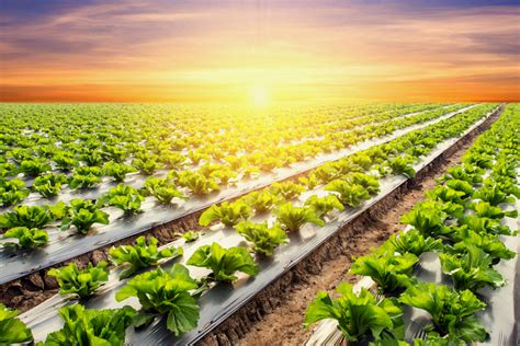 Humbled Mba by Mba Preview Day The Humble Lettuce And Henley