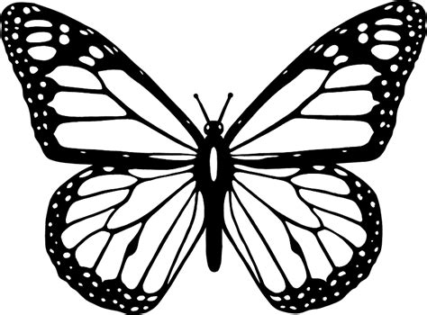black and white coloring pages of butterflies clipart black and white butterfly