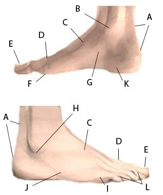 foot side of foot diagram find your foot http www footcareproductsga