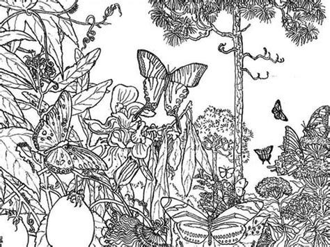 printable rainforest flowers rainforest butterfly coloring pages butterfly rainforest
