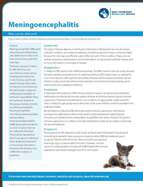 yorkie seizure like symptoms meningoencephalitis